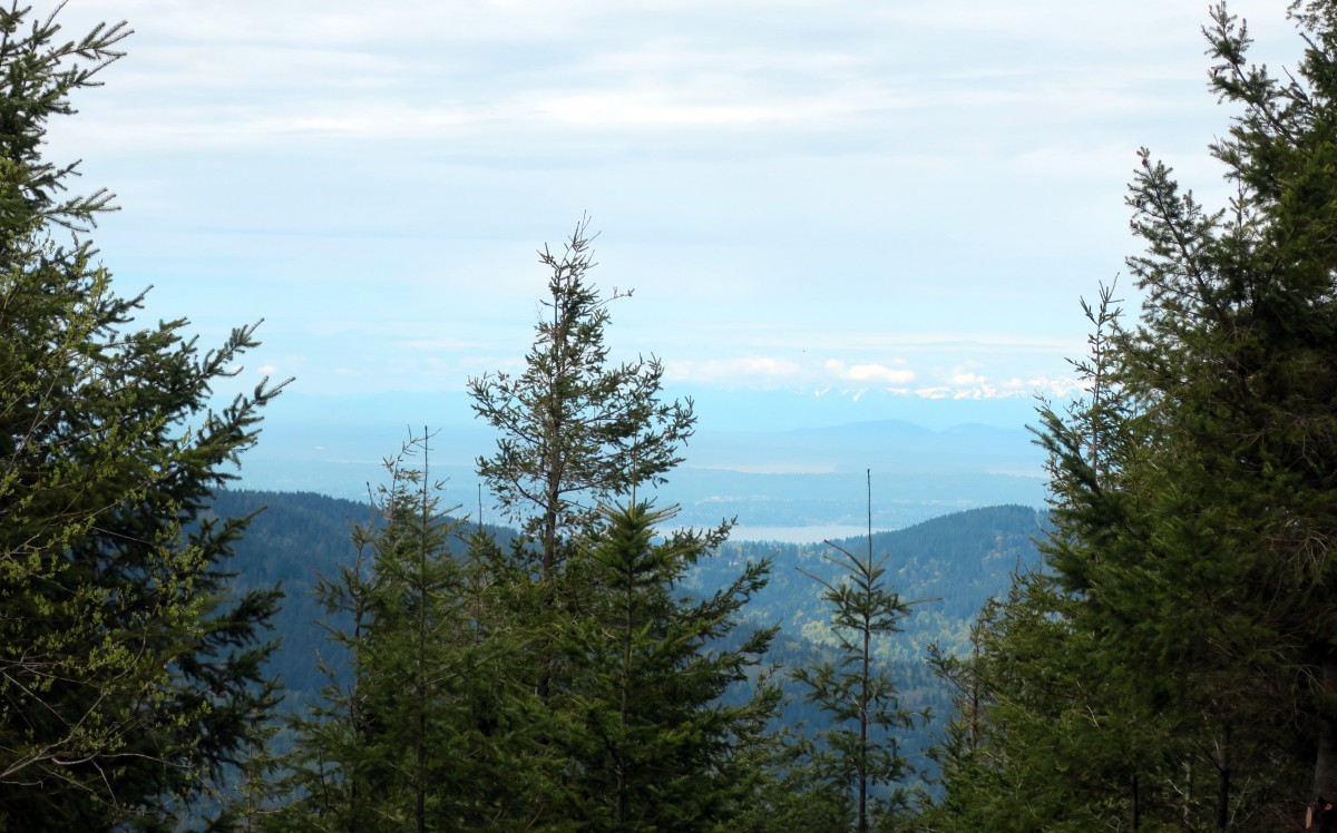 mountain view cougars personals Top 10 hikes around washington  the view from the pass,  the mountain is visible in all its glory as is grand park,.