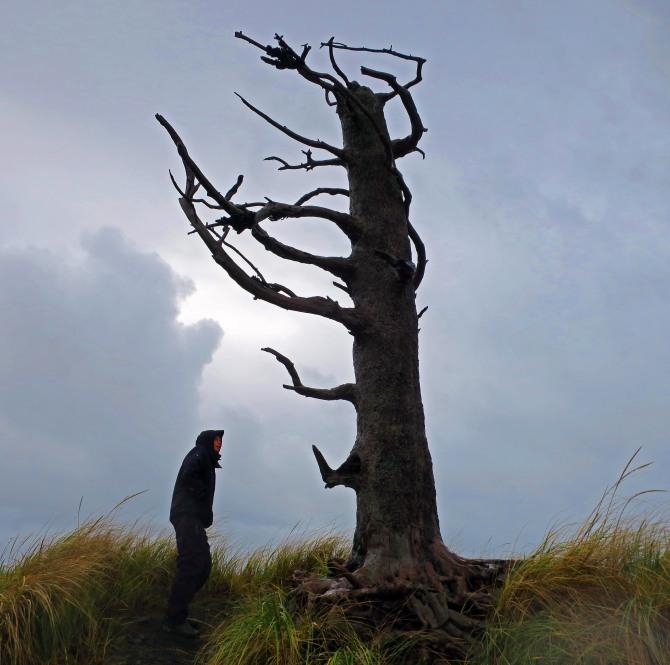 D4_Tree
